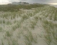 Dune - CRII