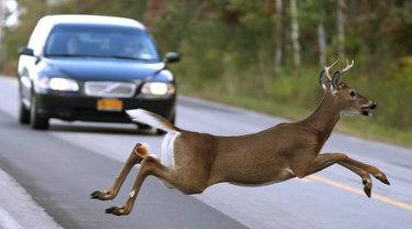 Deer II - CR