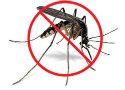 Mosquito - CR II